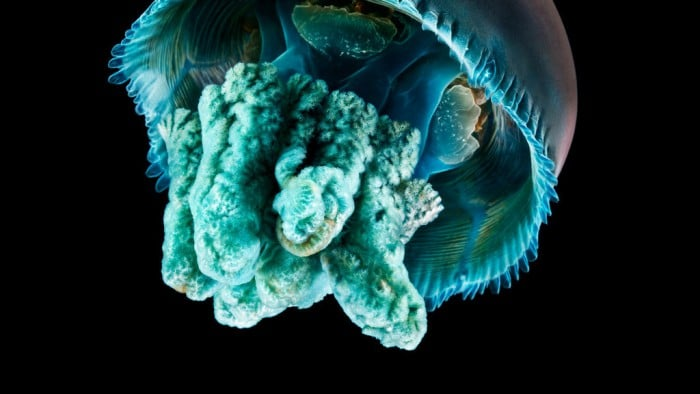 Apple-Watch-Jellyfish-1024x576