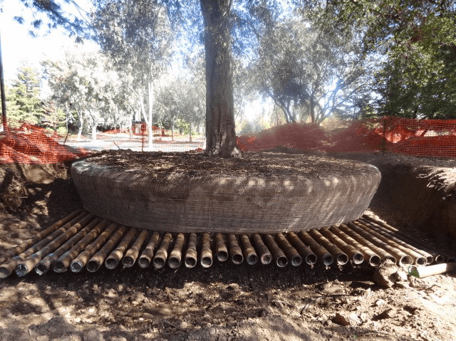 Apple park fa ültetés