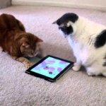 cicás játékok iPadre és iPhone-ra