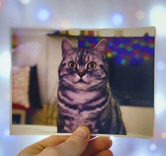 Sender, küldj ingyen képet a postával - Egy macska van a képem